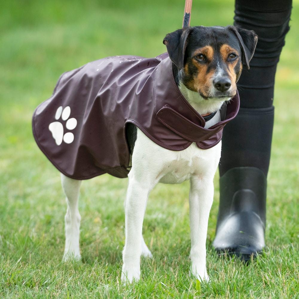 Koirantakki  Egana