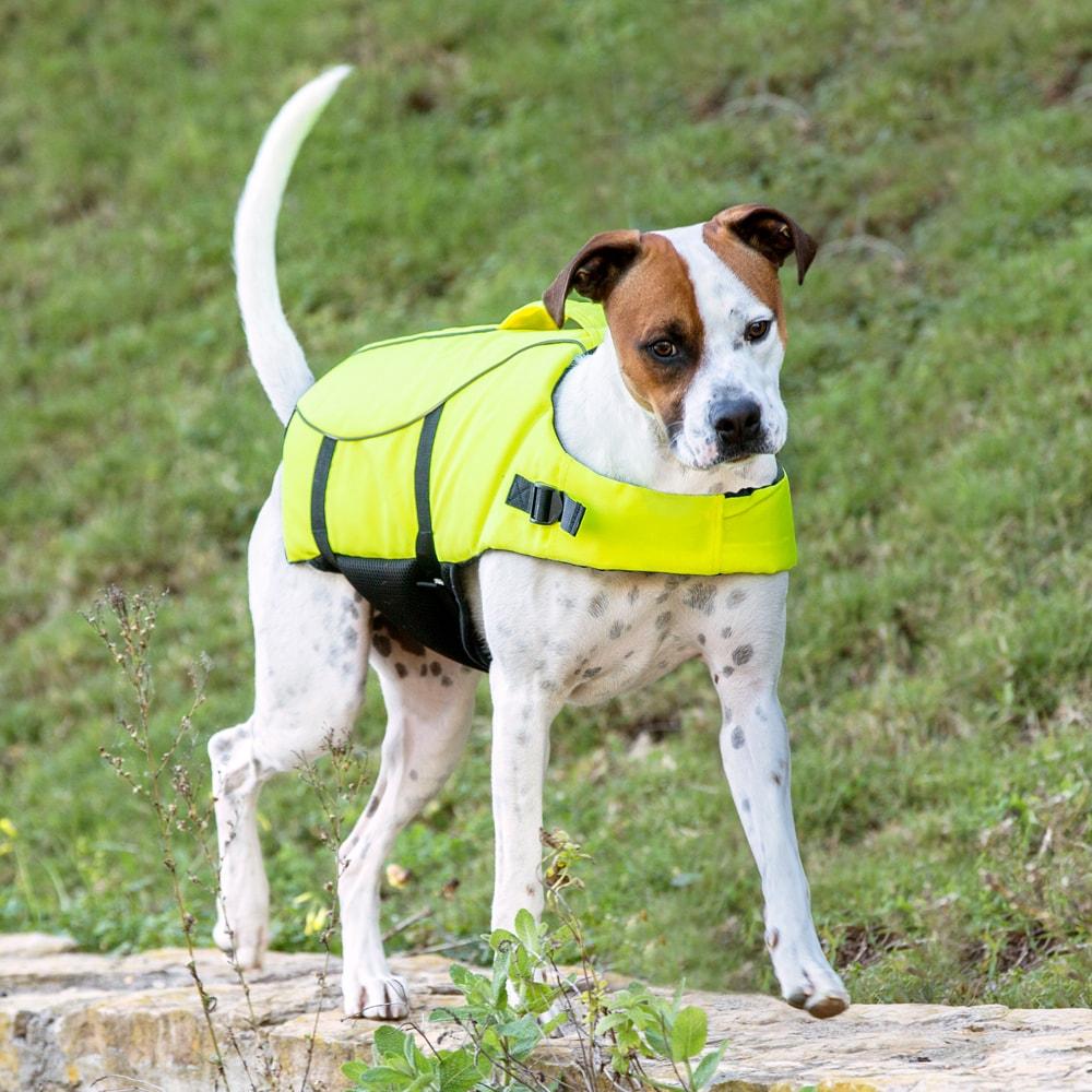 Koiran Painotaulukko