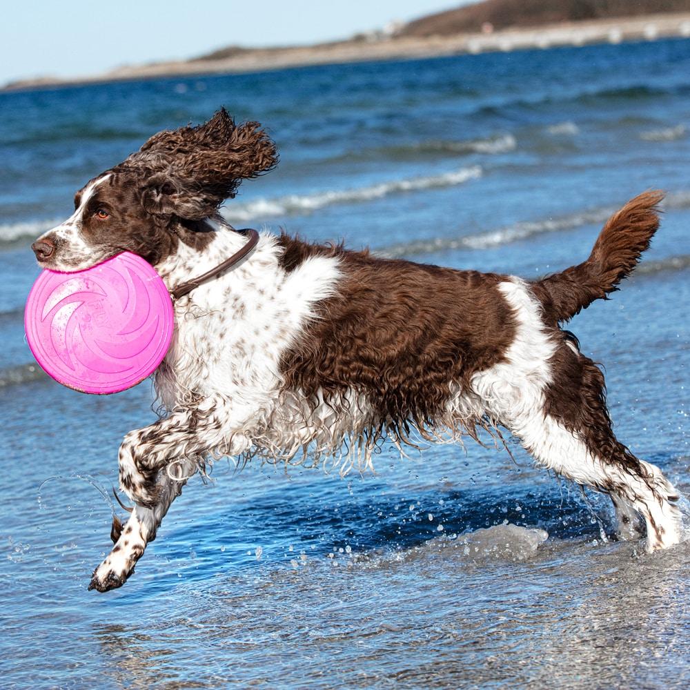 Koiranlelu  Frisbee Showmaster®