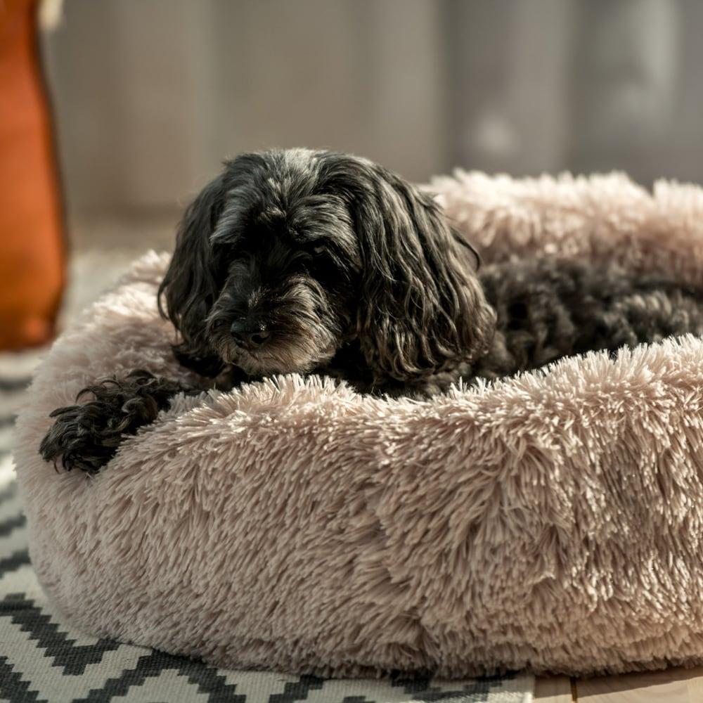 Koiranpeti  Donut Showmaster®
