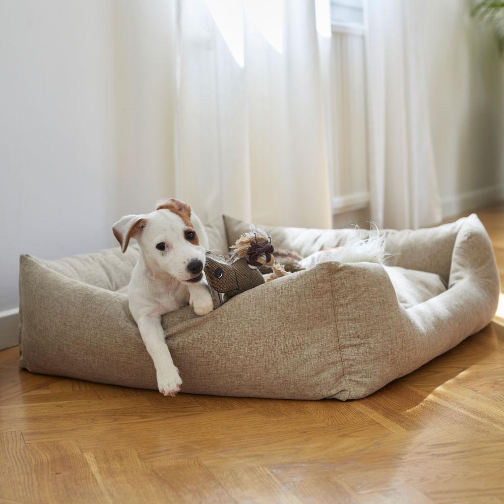 Koiranpeti  Flax traxx®
