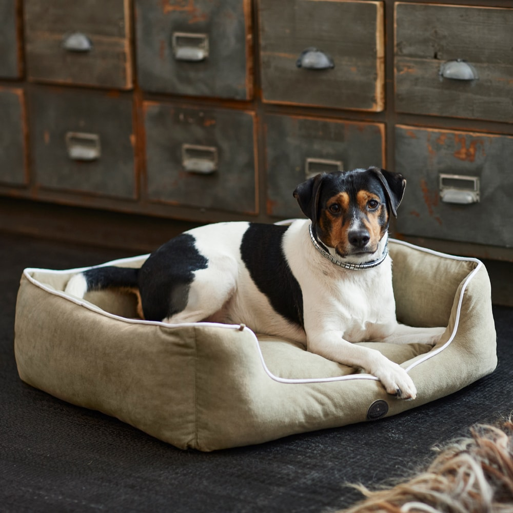 Koiranpeti  Palena JH Collection®