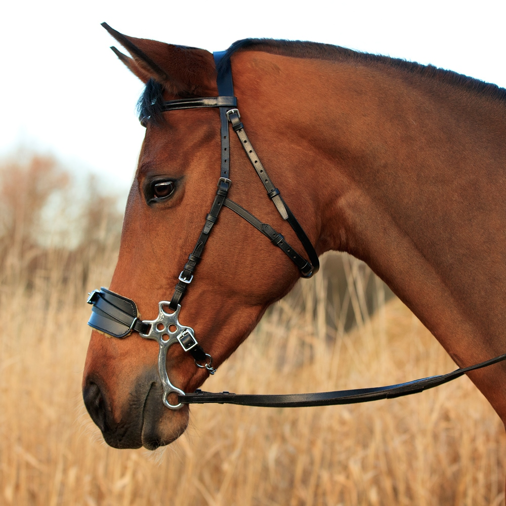 Poskiremmit Hackamore  Fairfield®